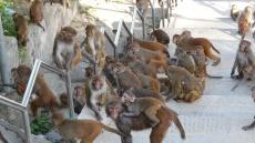 Traversée de singes!