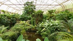 La serre regroupe les espèces qui nécessitent plus d'humidité